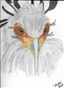 """Secretary Bird #3"" Zoo Print"