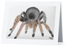 """Tarantula"" Note Cards"