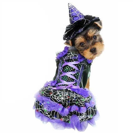 Halloween Dog Costume | LED Purple Witch