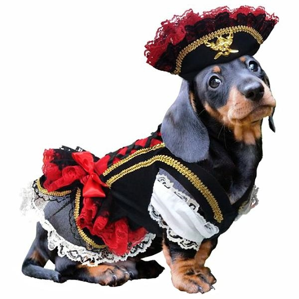 Swashbuckler Pirate Girl Dog Costume  sc 1 st  Snooty Pooch Boutique : girl dog costume  - Germanpascual.Com