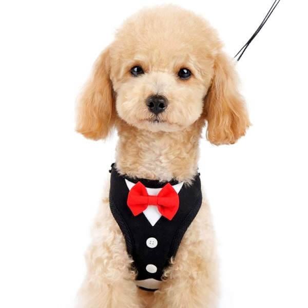 08710BK 2?1540987821 bowtie tuxedo small dog harness