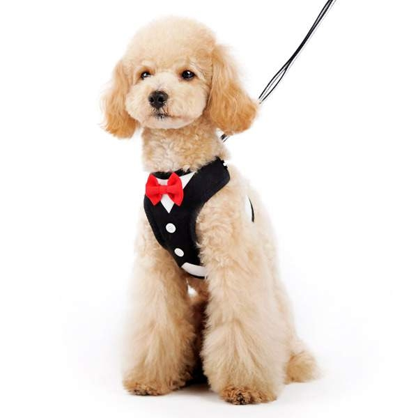 Bowtie Tuxedo Small Dog Harness