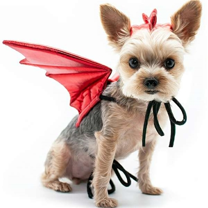 Red Dragon Wings Halloween Dog Costume
