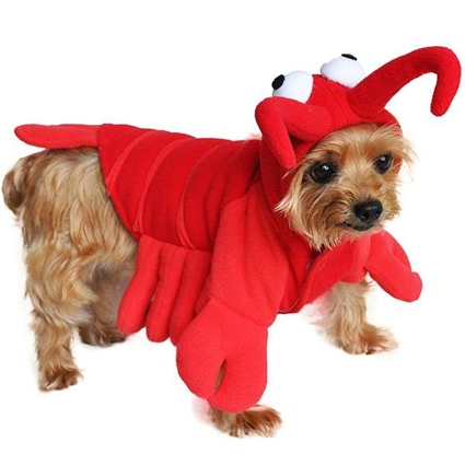 Red Lobster Halloween Dog Costumes