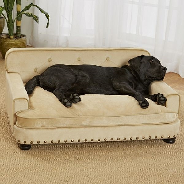 Library Dog Sofa Bed: Micro Velvet