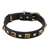 Studded Leather Dog Collar with Tiger Eye