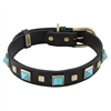 Studded Leather Dog Collar with Turquoise