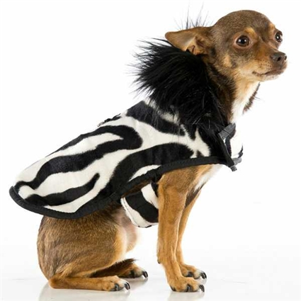 Posh Puppy Designer Dog Coat | Zebra