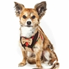 Dapper Bow Tie Dog Harness | 2-In-1