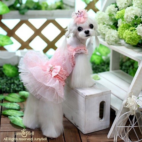 aebed46a455 Frilly Lace and Pearls Designer Dog Dress
