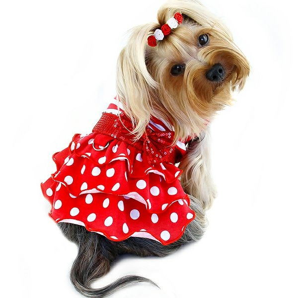 9fb0b6ecd3 A red and white dog dress with a striped top and polka dots ruffled skirt  accented with a sparkling sequin belt and bow (attached).