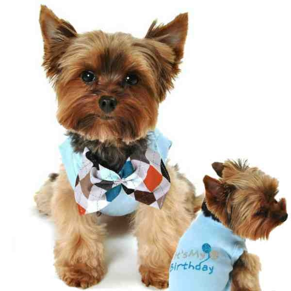 This Birthday Shirt For Small And Large Boy Dogs Is A Blue Cotton With Its My In Silver Turquoise Glitter Features