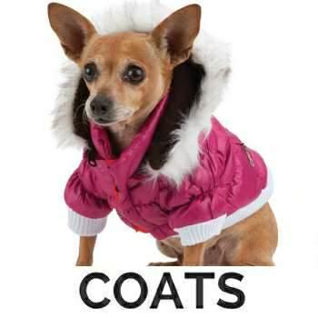 The Best Gucci Dog Coat Pics