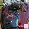 Biker Dawg Motorcycle Dog Jacket