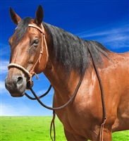 Mustang® Hackamore w/Braided Nose