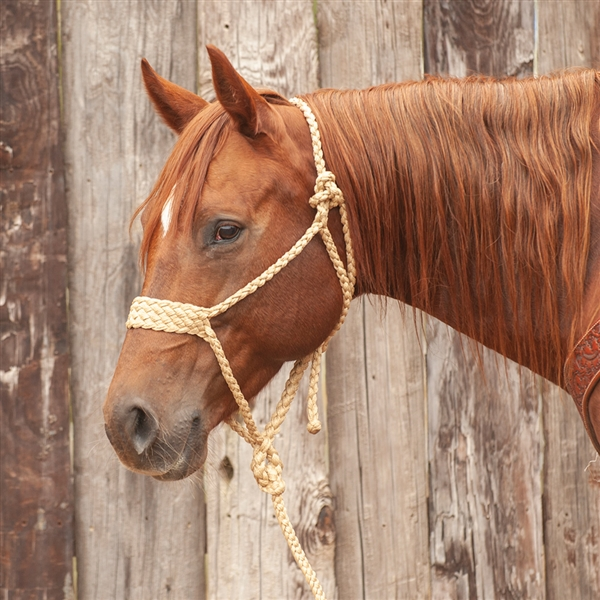 Martin Saddlery® Tan Wide Nose Mule Tape Halter w/Lead