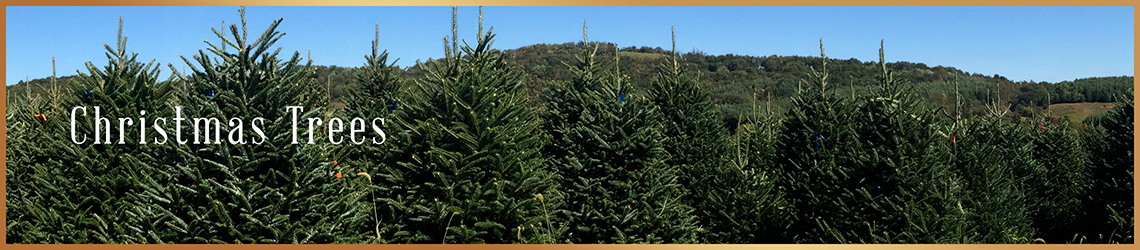 Real Christmas Trees for Sale | Real Christmas Trees Delivered