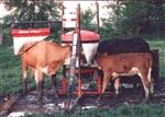 Cattle Oilers & Rubs