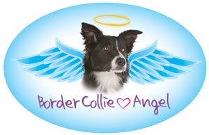 Border Collie Angel Oval Magnet - A43