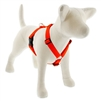 "Lupine 1"" Blaze Orange 24-38"" Roman Harness"