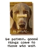 Dog Speak Encouragement #1028