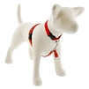 "Lupine 3/4"" Go Go Gecko 16-26"" No-Pull Harness"