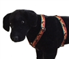 "Lupine 1"" Moose on the Loose 20-32"" Roman Harness"