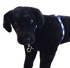 "Lupine 3/4"" Polar Paws 14-24"" No Pull Harness"
