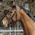 Barefoot Devon English Bridle