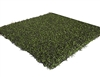 Craftsman Series PURE Putt turf