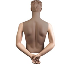 Male Mannequin Arms: Hands Behind Back, Fleshtone