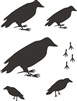 Crows 5 Sizes Primitive Stencil