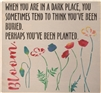 "When You Are In A Dark Place...Popppy/ Flower Graphics Bloom 12 x 12"" Stencil"