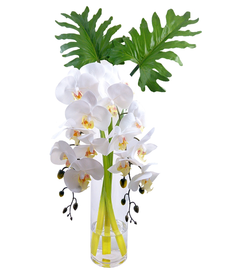 Phalaenopsis Orchid With Monstera Leaf In Cylinder Vase