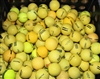 300 Assorted Yellow Range Golf Balls - Grade 4A/3A Mix