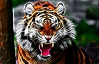 TIGER #4 Wall/RV Decal