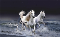White Horse Stallion Mustang #2 RV/Wall Decal
