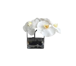 Modern Floral Arrangement Glass and Black Stone White Orchids 5""