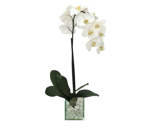 "Modern Floral Arrangement Glass and White Stone White Orchids 5""W x 20-25""H"