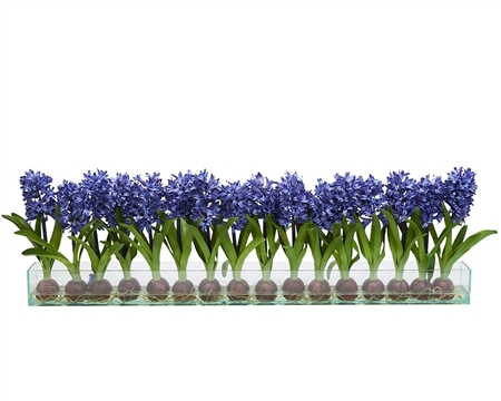 Modern Hyacinths on Casa Moderna Planter - BLUE 24""