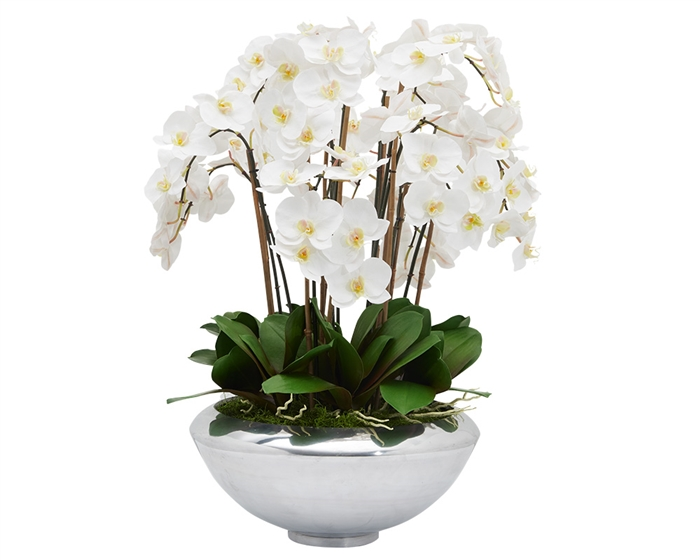 Avenue bowl with multiple stems of white Phalaenopsis orchids. - * Special Order