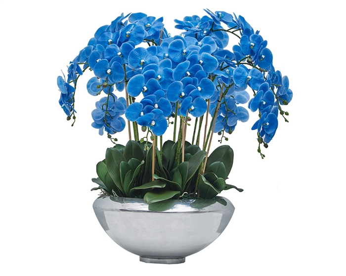 Avenue bowl with multiple stems of blue Phalaenopsis orchids - * Special Order