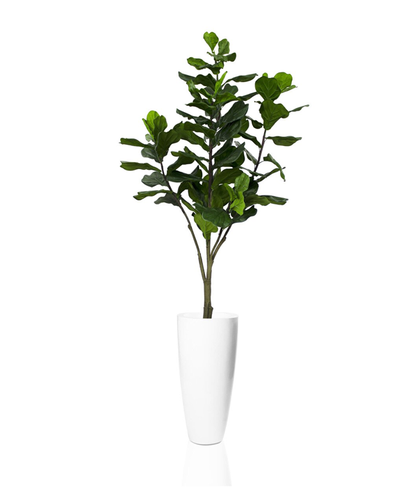 Dax glossy white finish fiberglass planter with large fiddle leaf tree- * Special Order