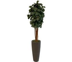 Fiddle Tree Arrangement with Grey Modern Planter