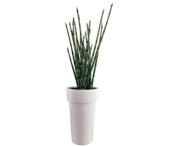 Snake Grass Medium Modern Floral Arrangement with Modern White  Planter
