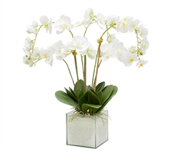 Square Glass Plate Modern Vase White Phaleanospis Orchid Tall Arrangement