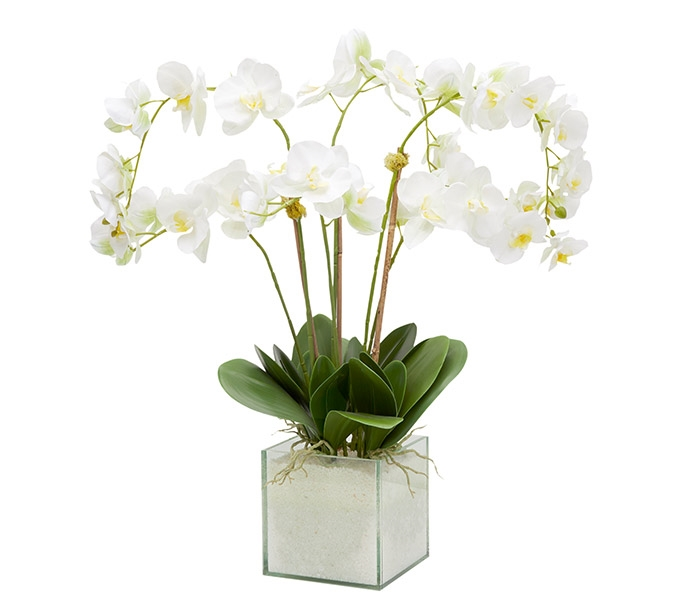 Square Clear Base White Orchid Arrangement