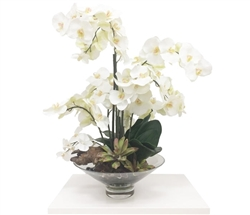 White Orchids in Harlow Modern Bowl