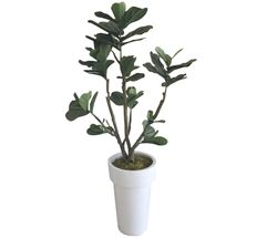 Modern Tree Arrangement with White Planter - Medium