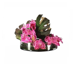 Heritage Bowl with Phylo Leafs, Driftwood and FUCHSIA Orchids 16""